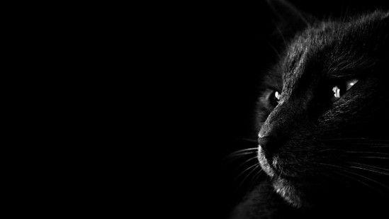 Самое время поговорить о кошках
