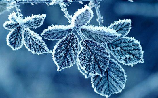 Снежные узоры декабря - 1 декабря